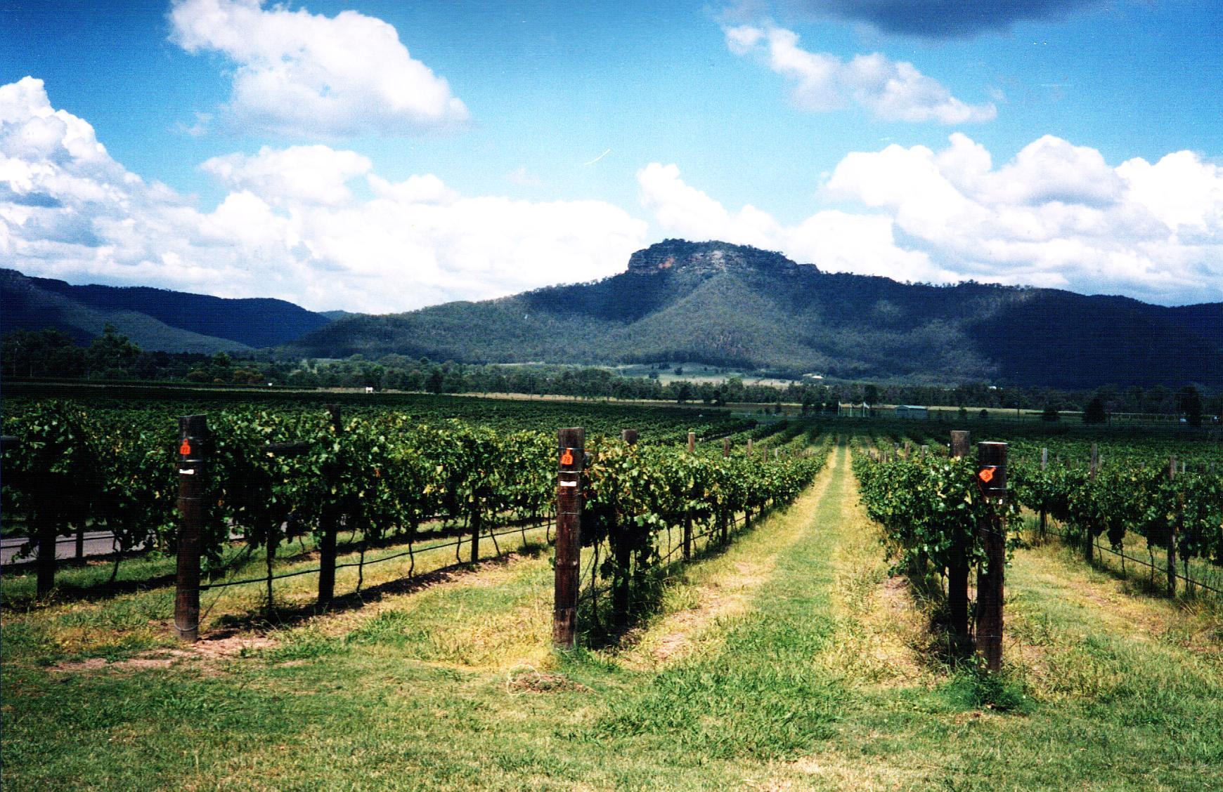 wine_country_wollombi